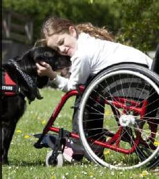 Labrador con disabili