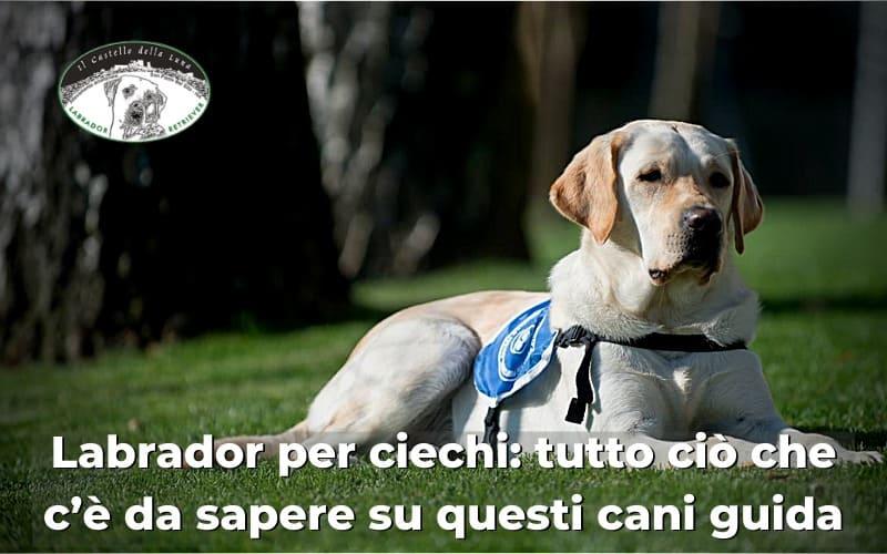 Labrador per ciechi tutto ciò che c'è da sapere su questi cani guida