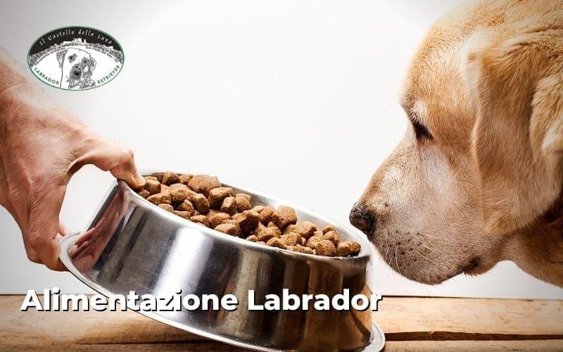 Alimentazione corretta di cucciolo Labrador e adulto cosa bisogna sapere