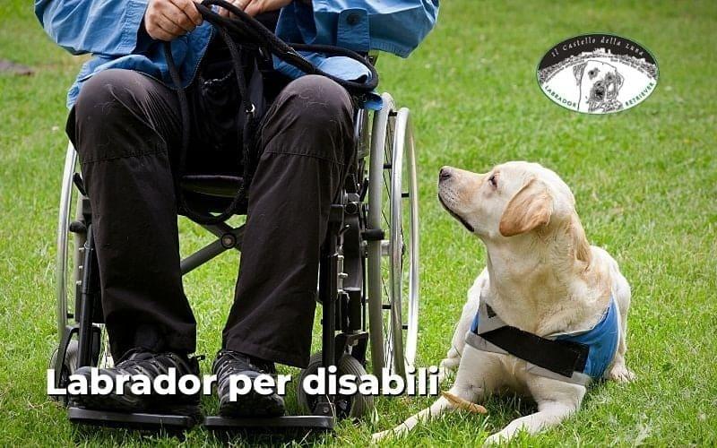Labrador per disabili un aiuto perfetto per un grande supporto